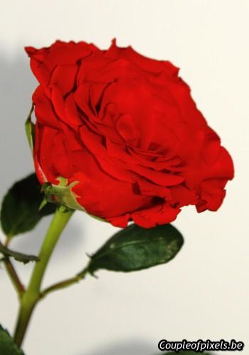 saint valentin,geek,couple,cadeaux